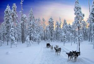 Finlande-traineau-a-chiens-laponie