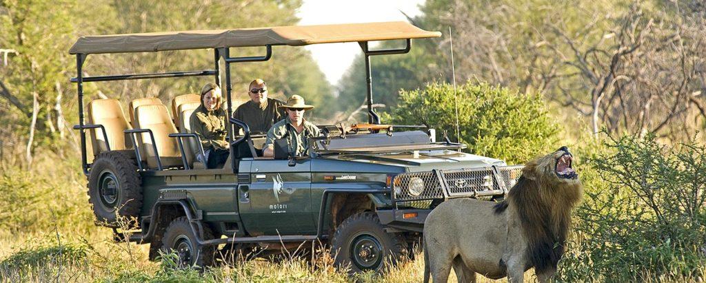 Safari sur-mesure en Afrique du sud